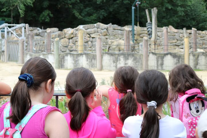 Wer entdeckt zuerst den Babyelefanten? (Bild: FSW)