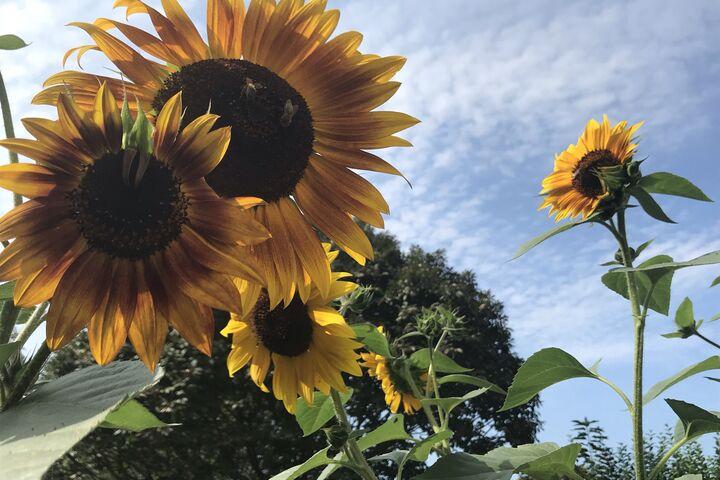 Der Garten blüht einladend (Bild: FSW)