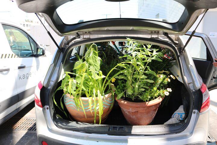 Das Auto von Brigitte S. war voller Pflanzen. (Bild: FSW)