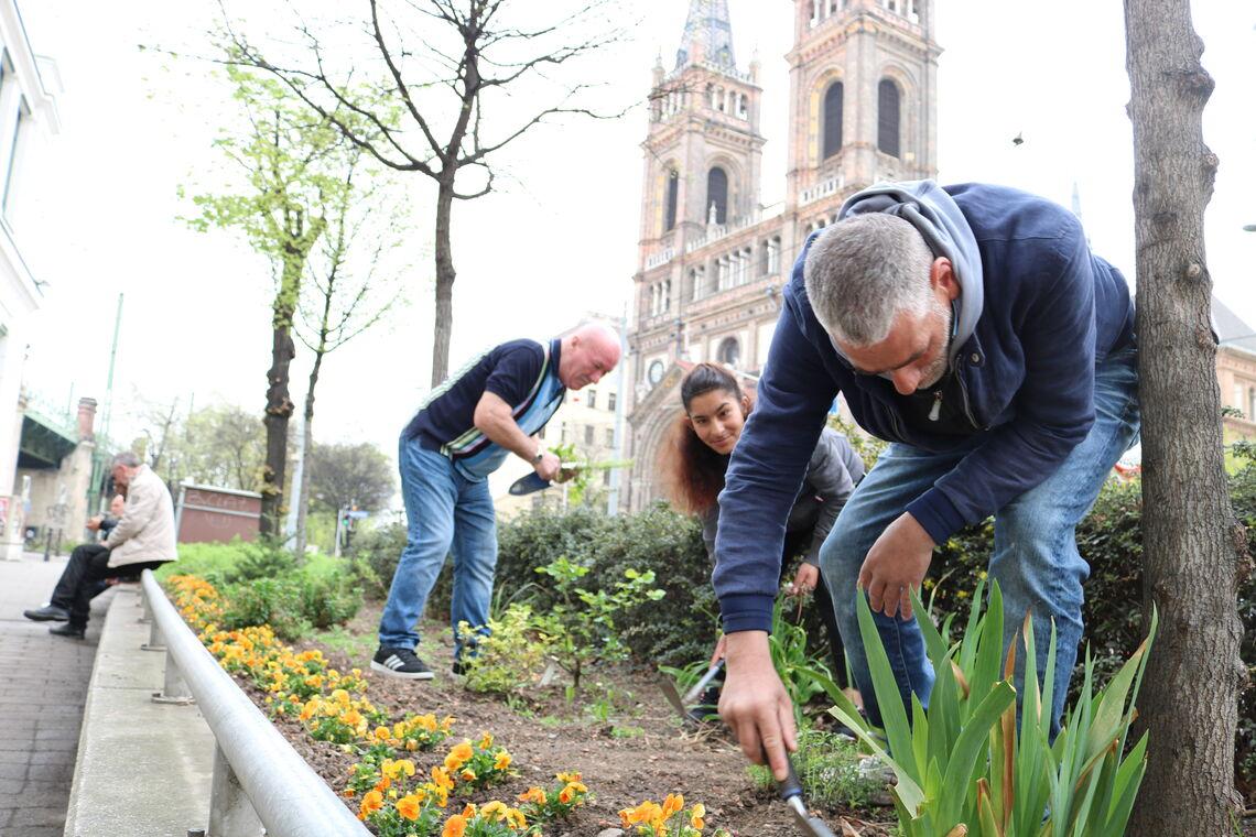 Obdach Josi Blumenbeet am Lerchenfelder Gürtel  (Bild: FSW)