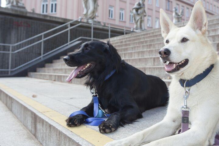 Obdach aXXept Hunde (Bild: FSW)